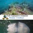 Подводное плавание. Изучение обитателей Черного моря