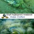Подводный мир глазами дайвера