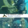 Погружения на затонувшие корабли в Анапе
