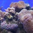 Коралловый риф, Океанариум РИФ, Анапа