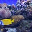 Коралловый риф и рыба Лиса, Океанариум РИФ, Анапа