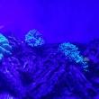 Коралловый риф ночью, Океанариум РИФ, Анапа