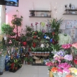 Комнатные цветы в магазине Прованс Анапа
