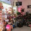 Комнатные цветы, живые растения в магазине Provence Анапа