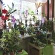 Цветы в горшочках, Магазин цветов FRESH, (Фреш), Анапа