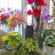 Живые цветы, Магазин цветов FRESH, (Фреш), Анапа