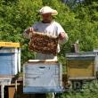 Осмотр рамок с пчелами