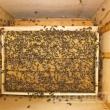 Пчелиная рамка с медом